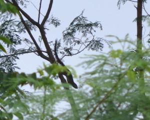 Nigeria mammal