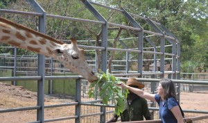 Sarah Johnson feeding Giraffe (Nigeria)